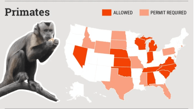 a map showing where bush babies are legal