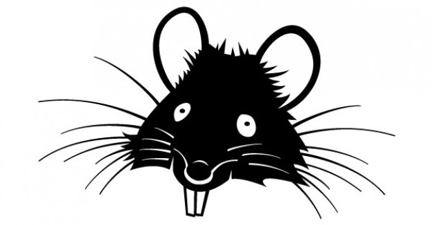 about rat teeth
