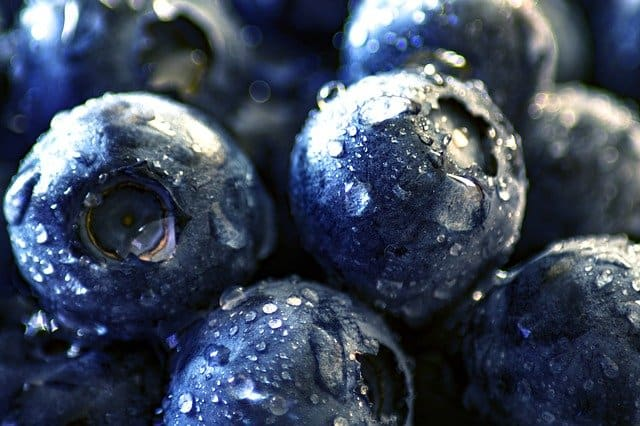 a picture of a blueberry - can parakeets eat it?