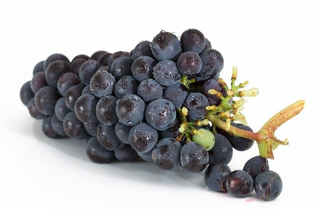 a picture of grapes - can mice eat this fruit safely?