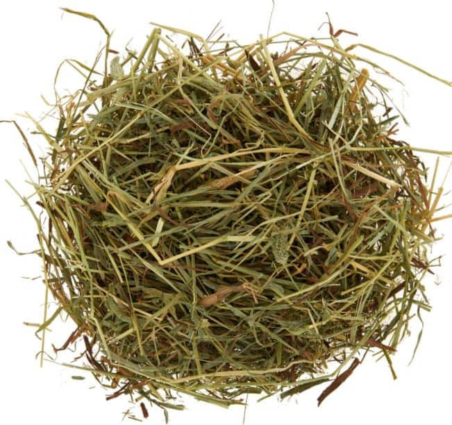 can rats eat hay