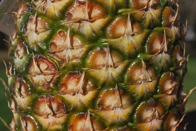 pineapple skin - should you remove it or is it safe to feed?