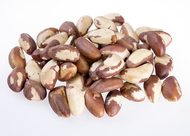 photo of brazil nuts - are they safe for hamsters to eat?