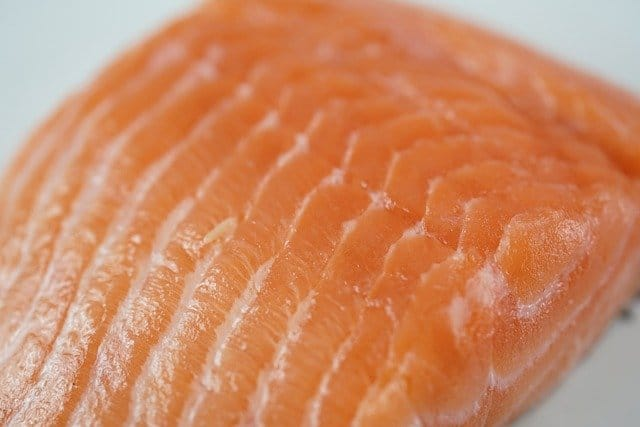 salmon - can hamsters eat it?